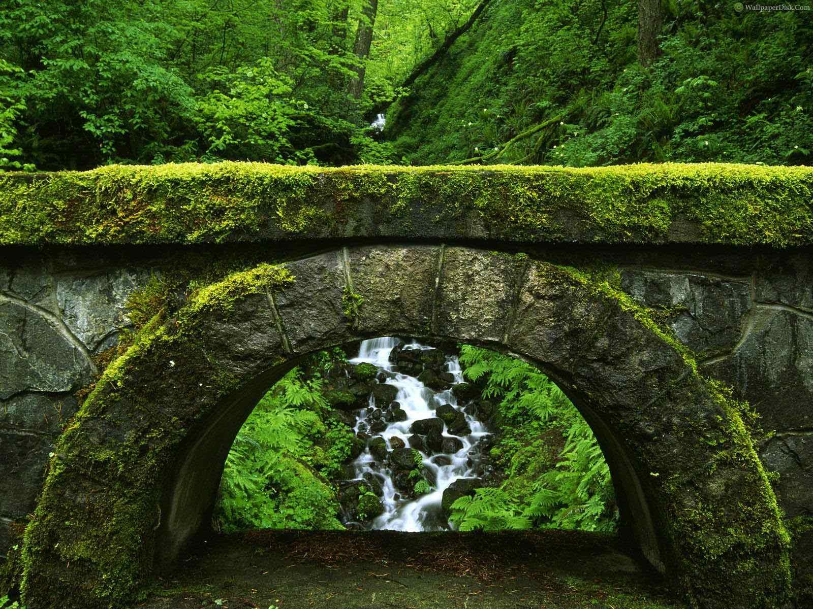 مجموعة من أجمل مناظر الطبيعة