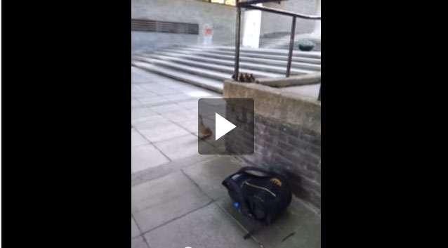بالفيديو: لقطة مضحكة لفراخ بطة تتبع أمها وتقفز من مكان مرتفع