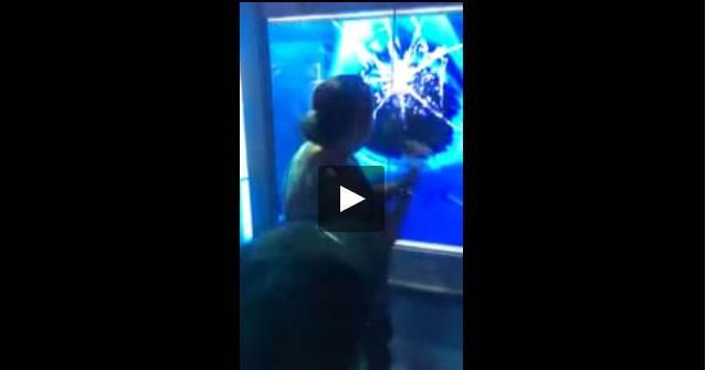 بالفيديو: ثلاثة ملايين مشاهدة لقرش يكاد يحطم زجاج الحوض ليهاجم سيدة