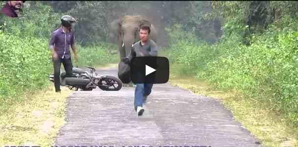 فيديو فيل يقطع الطريق أمام شابين على دراجة نارية مثير