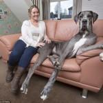 أكبر-كلب