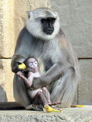 صور حيوانات مصوره خلال عام 2014