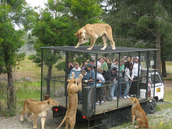 صور حيوانات مثيرة للاهتمام ملتقطة خلال عام 2014