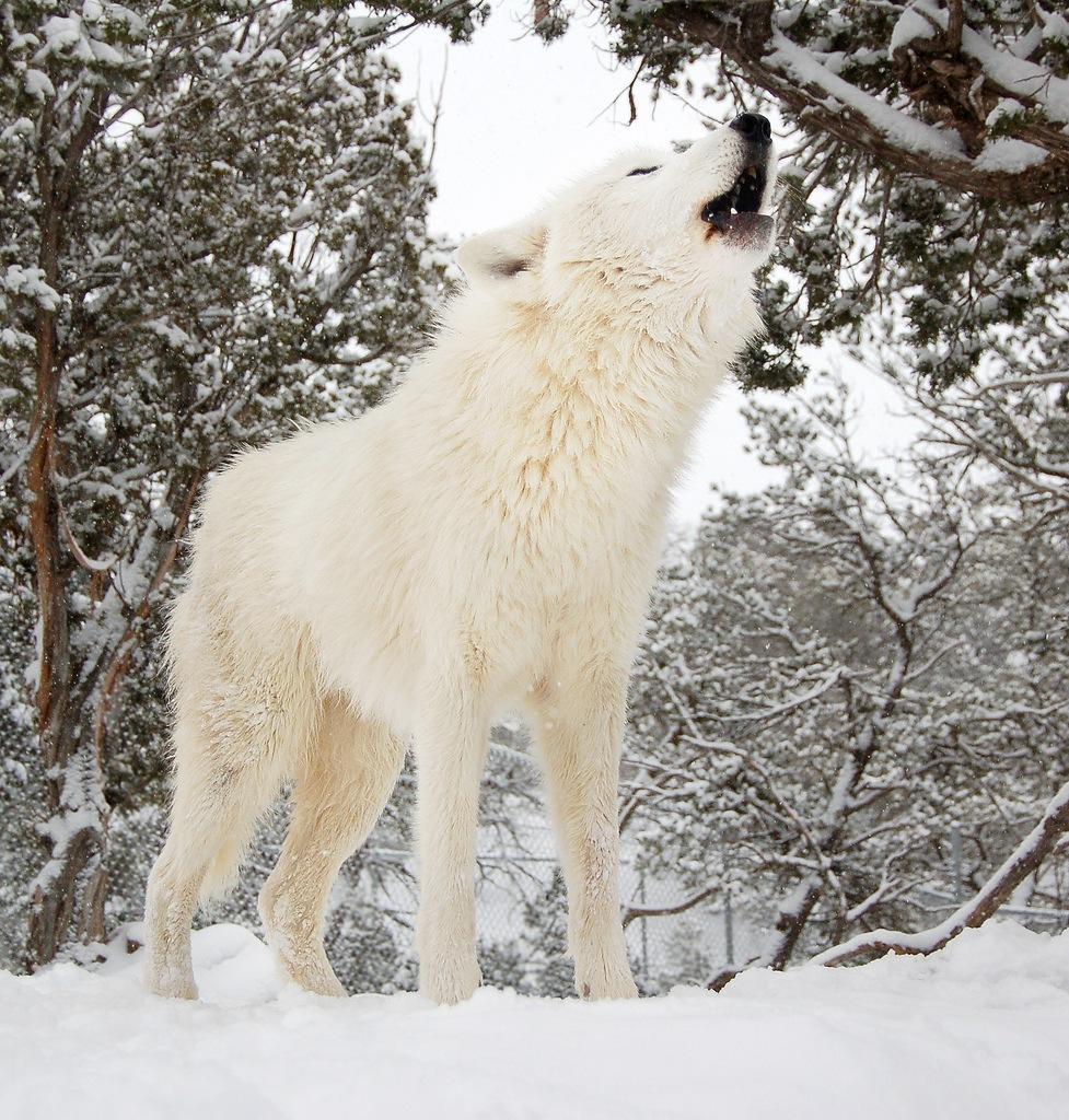 اجمل الحيوانات