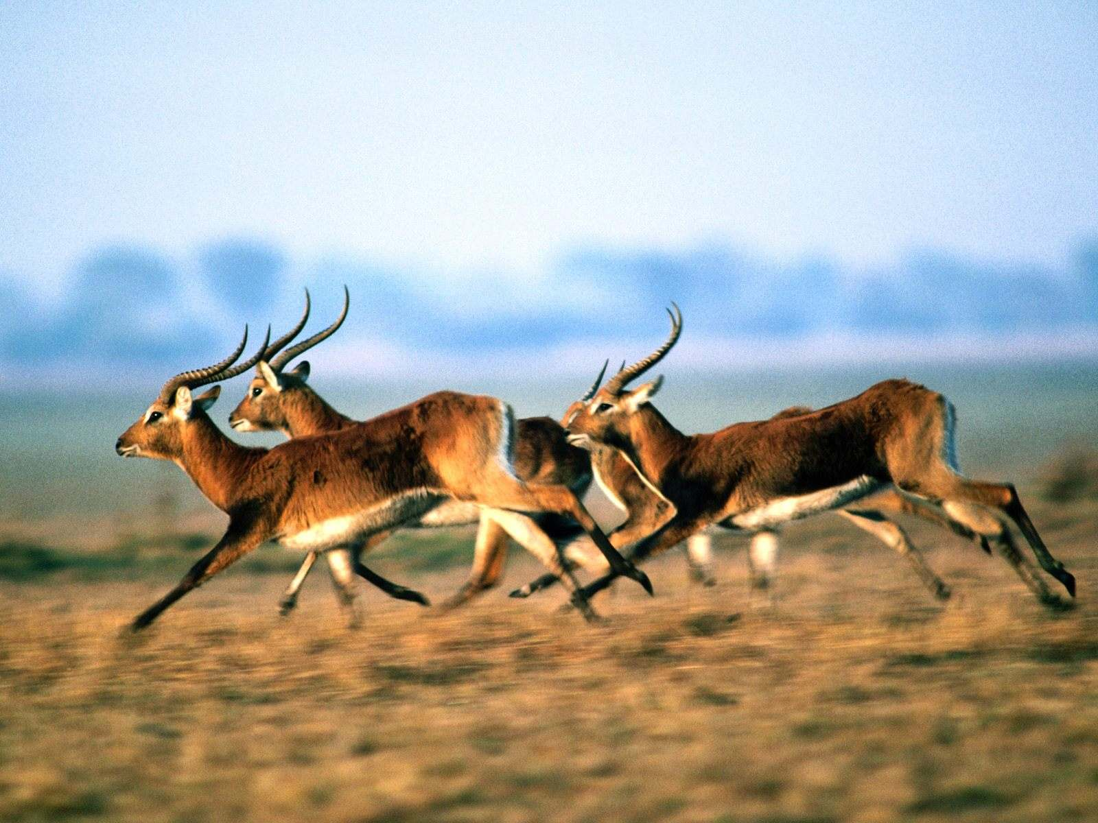الحياة البرية الرائعة