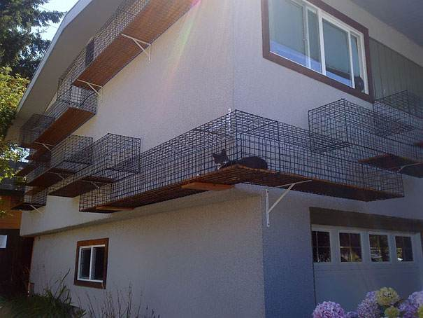 اختر بيت حيوانك الأليف