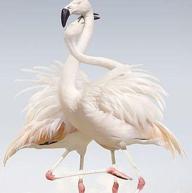 أجمل الطيور التي يمكن أن تراها ألوان خلابة و جمال ساحر تابعوها بالفيديو